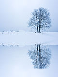 Solitude Standing. Lonely tree in snow field reflected on water surface Stock Image