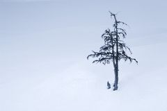Solitude Standing. Lonely tree in snow field stock image