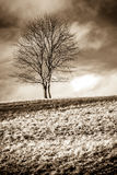 Solitude standing. Single leafless tree on a grassy hill representing solitude Stock Photography