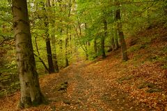 Solitude and tranquility of an autumn forest. stock photo