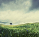 Solitude tree Royalty Free Stock Photo