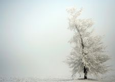 Winter tree Royalty Free Stock Image