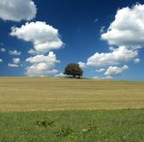 Solitude tree Royalty Free Stock Photography