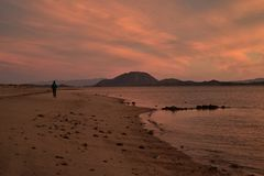 Solitude of a walk along a beach at dawn in Baja, Mexico. One person alone , the solitude of a walk along a beach at dawn on the Bay of California, also known as Stock Image