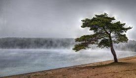 Solitudine del pino, mattina di autunno Immagini Stock Libere da Diritti