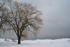 Solitudine di inverno Fotografia Stock