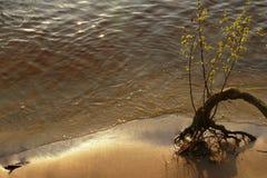 Solitudine a terra Fotografia Stock