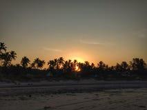 Sollöneförhöjning över kokosnötdunge arkivfoto