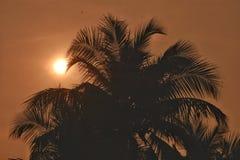 Sollöneförhöjning royaltyfri fotografi