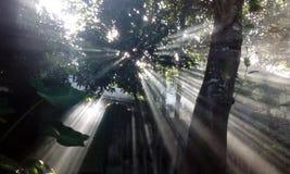 Sollöneförhöjning Arkivfoton