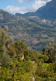 Soller mountain landscape Royalty Free Stock Photography