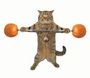 Sollevatore pesi 5 del gatto Immagini Stock