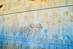 Sollievi delle scala di Apadana, Persepolis, Iran Immagine Stock Libera da Diritti