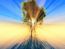 solljus Fotografering för Bildbyråer