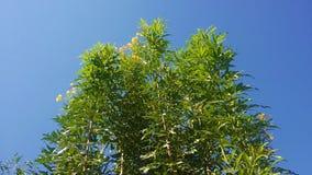 Solljus bland träd Royaltyfria Foton