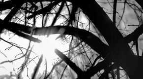Solljus bryter till och med filialerna av ett träd med filialintelligens Arkivbild