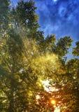 Solljus för ang för solhimmelskog Arkivfoton