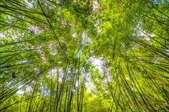 solljus för bambuskogmorgon Arkivbild