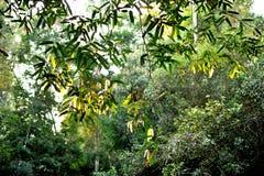 solljus för oak för skog för design för kant för ekollonhöstbakgrund Royaltyfri Bild
