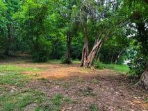 solljus för oak för skog för design för kant för ekollonhöstbakgrund fotografering för bildbyråer