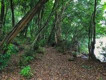 solljus för oak för skog för design för kant för ekollonhöstbakgrund royaltyfria foton