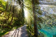 Solljus för sen sommar som bryter till och med träden på en mystisk gränd Royaltyfri Foto