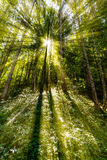 Solljus för sen sommar som bryter till och med träden på en mystisk gränd Arkivfoto