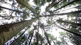 Solljus för trä för gräsplan för natur för skogträd