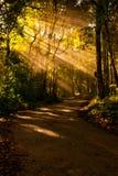 solljus för väg för exponeringsskognatur roadcentral Royaltyfria Bilder