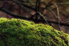 Solljus faller på en kulle med grön mossa i skogträdfilialerna i bakgrunden royaltyfri foto