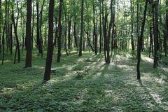 Solljus i den gröna skogen, fjädrar tid Arkivbild