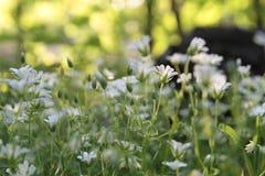 Solljus i den gröna skogen, fjädrar tid Royaltyfri Bild