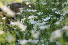 Solljus i den gröna skogen, fjädrar tid Royaltyfri Foto
