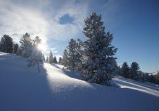 Solljus i den snöig Siberian skogen Arkivfoto