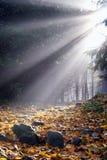 Solljus i dimman Arkivfoto