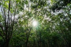Solljus i en skog Fotografering för Bildbyråer