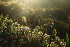 Solljus i naturen Arkivbilder