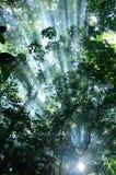 Solljus i skog Arkivfoto