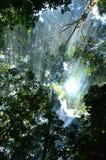 Solljus i skog Royaltyfri Bild