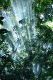 Solljus i skog Royaltyfria Bilder