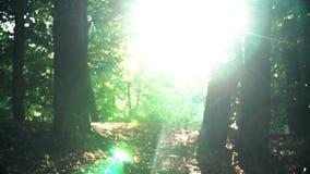 Solljus i skogen stock video