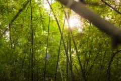 solljus i trädskog Arkivbilder
