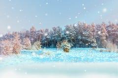 Solljus i vinterskogen Arkivfoto