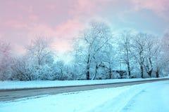 Solljus i vinterskogpanoramautsikten Panoramavintersaga arkivbilder