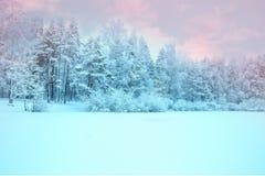 Solljus i vinterskogpanoramautsikten Panoramavintersaga arkivbild