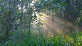 Solljus med skogen Arkivfoton