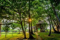 Solljus mellan träd Arkivfoton