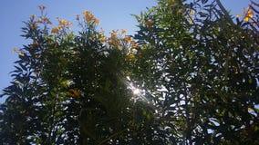 Solljus och blommor Arkivfoton