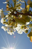 Solljus och blommor Arkivbilder