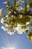 Solljus och blommor Royaltyfri Foto